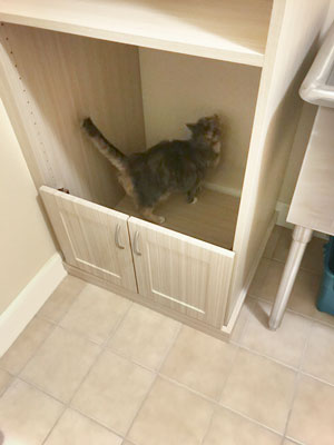litter box cabinet in laundry room